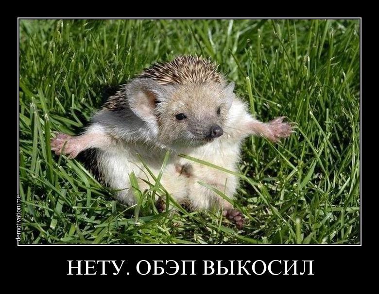 voyyqb5v6nqa.jpg